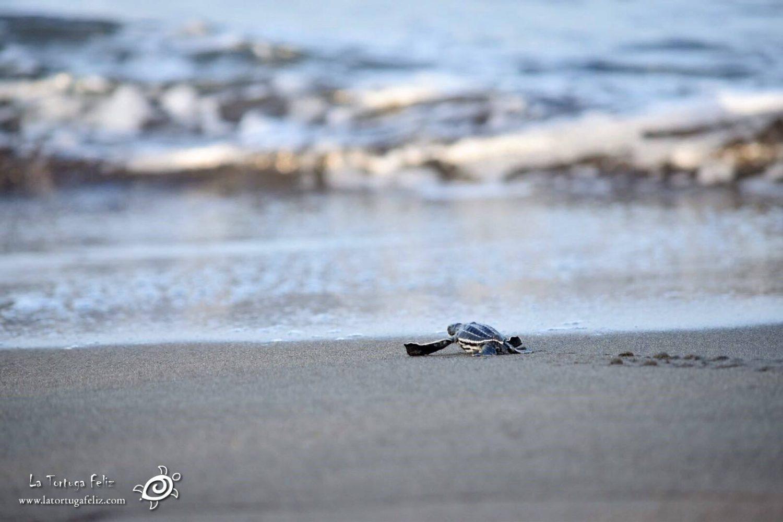 Volunteer in Costa Rica with Sea Turtles