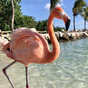 Aruba honeymoon Renaissance Island Flamingos