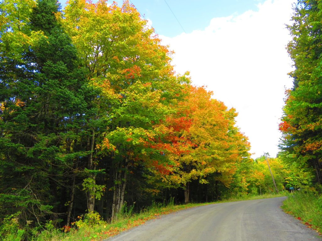 New England Leaf Peeping